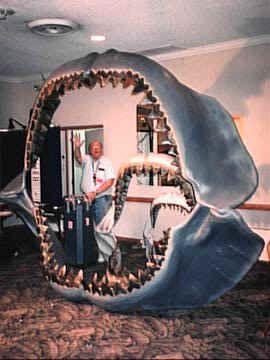 piratfisk tænder billeder